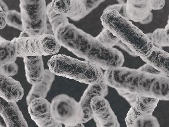 悪玉菌はなぜ増える | 乳酸菌ラ...